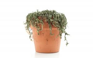 GardeningKnowHow.com