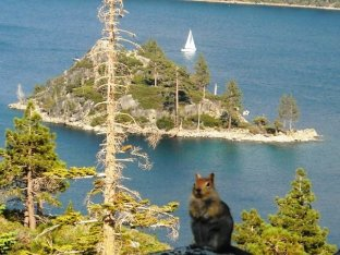 chipmunk_island