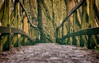bridge-3024771