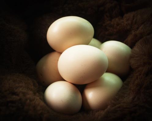 egg-1549356